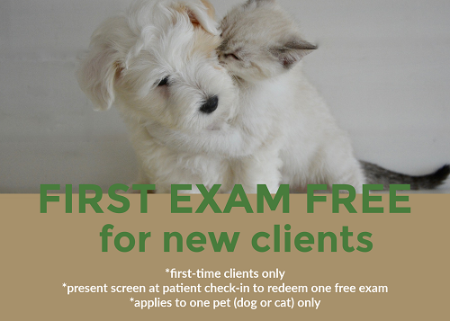 Free Vet Exam For New Clients In Rogers And Bentonville All Pets Animal Hospital