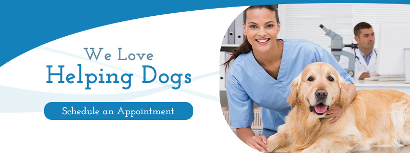 Veterinary Services Rogers Read Our Blog To Learn More All